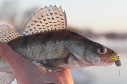 how to find walleye ice fishing